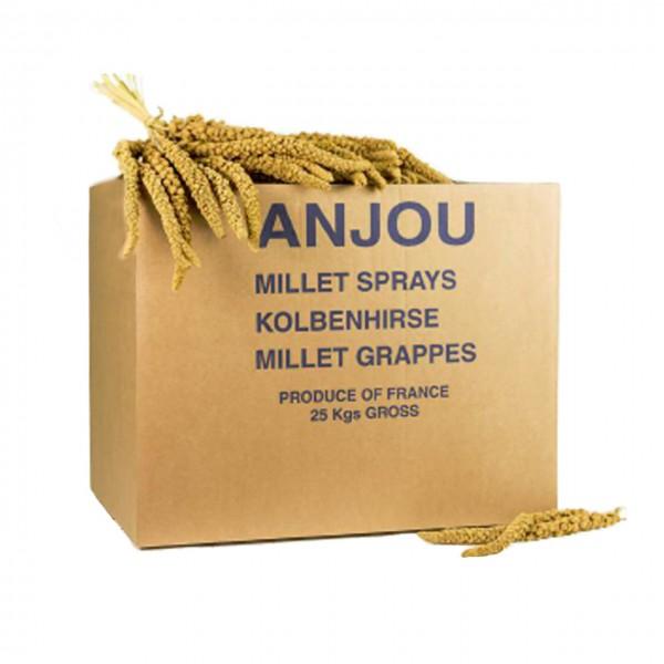 ANJOU - Kolbenhirse gelb Frankreich